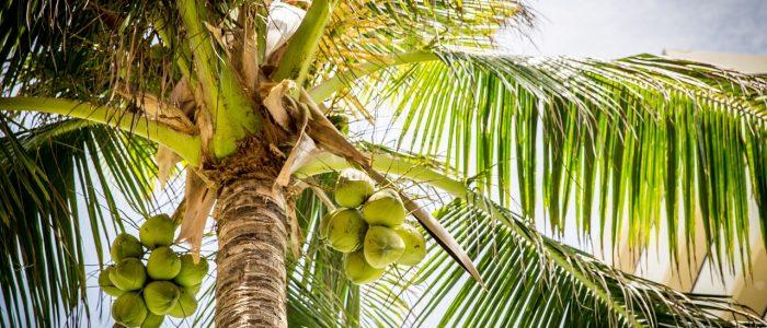 coconutgoldonline.co.uk coconut